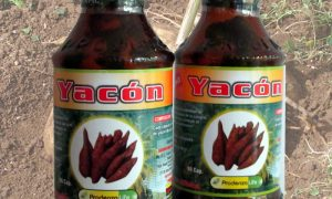 yacon-prodenza-life