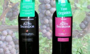vino-organico-alto-salvador